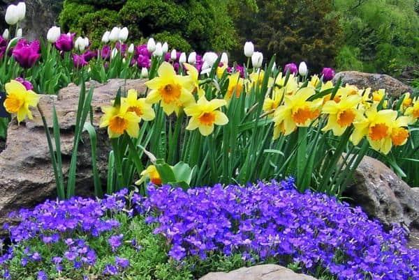 healthy lawn fertilizer treatments